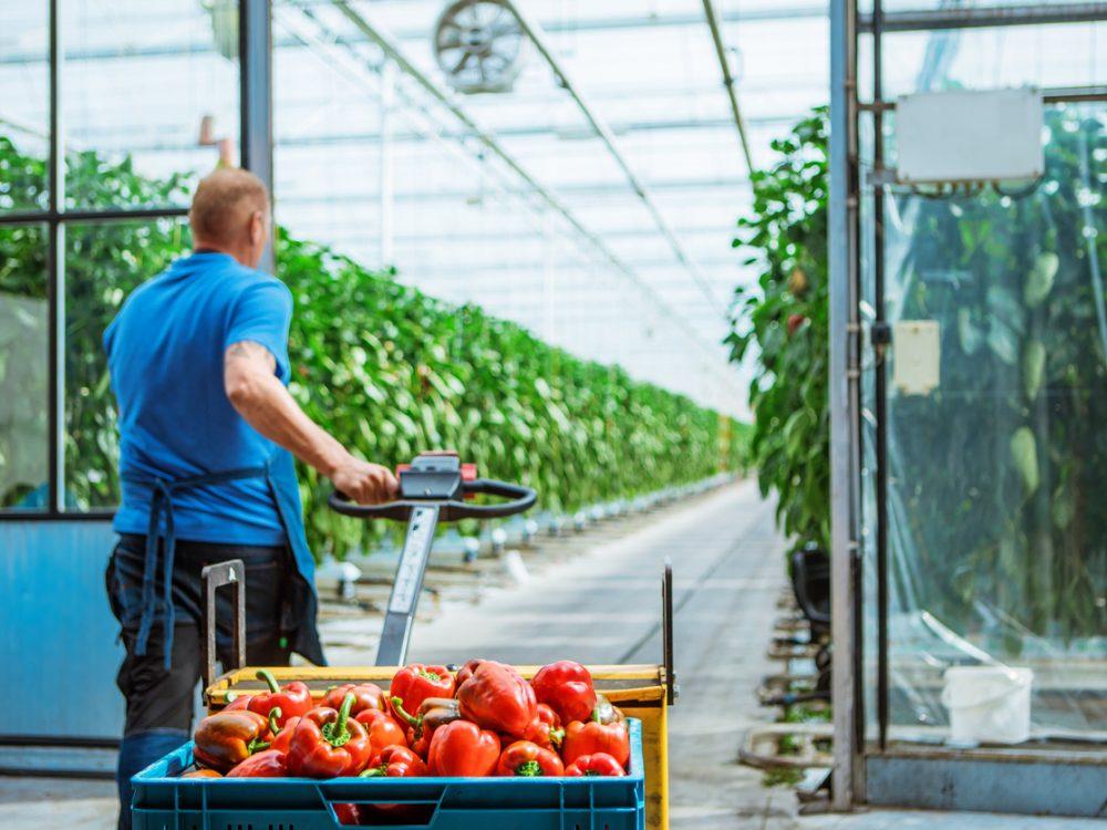 Care for Companies - productie - groente/fruit
